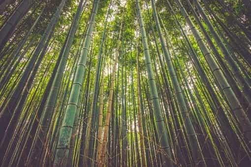 Making bamboo bottles or utensils