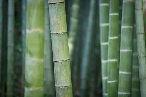 Start the business of bamboo bottle, lamp or crockery